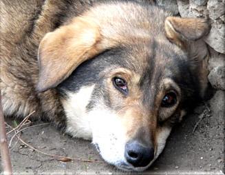 Бездомная собачка