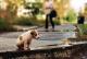 Бездомные животные - собака
