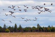 перелетны птицы
