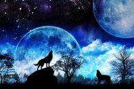 почему волк воет на луну