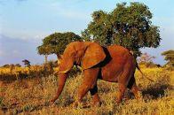 животные в природе