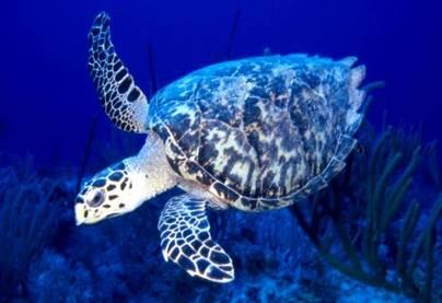 Черепахи Бисса