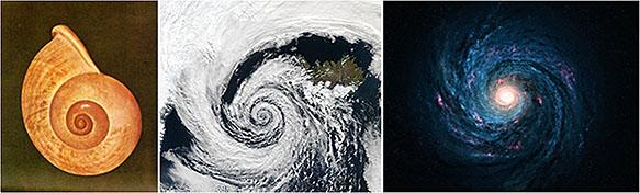 Раковина моллюска Наутилуса, циклон и галактика