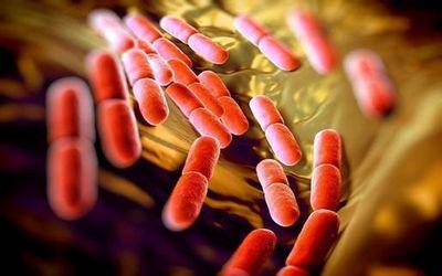бактерия 1
