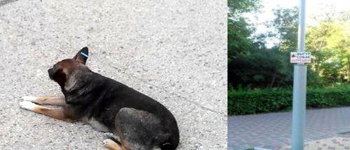 Борьба с бробячими собаками в Евпатории