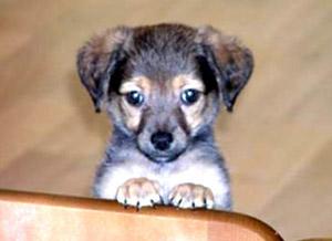 Симпатичный и одинокий щенок