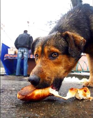 Голодная собака