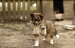 Собака дай лапу