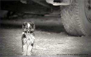 Водители не сбивайте собак