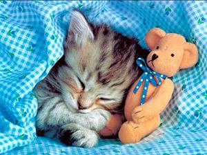 Спящий котенок с игрушкой
