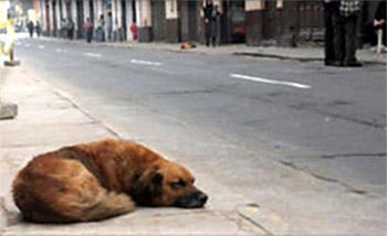 Собака на асфальте