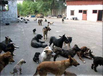 Бродячие собаки в городе