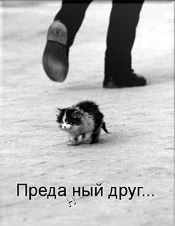 Преданный друг - котенок