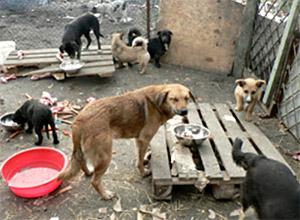 Бездомные собаки во дворе