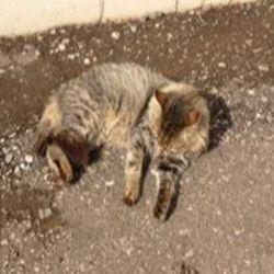 окрас кошек 3