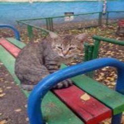 окрас кошек 5