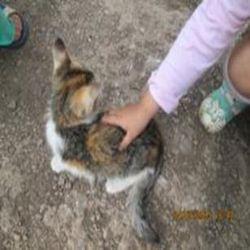окрас кошек 7