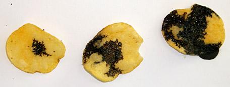 Качественное определение крахмала в чипсах