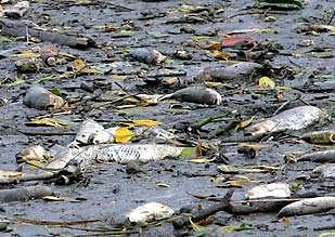 последствия разливов нефти в море