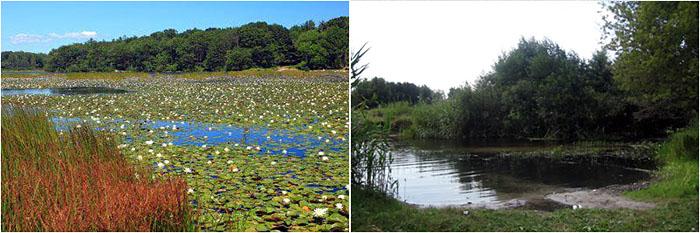 Обмеление реки и заболачивание ериков в районе моего села