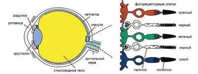 физика зрения 2