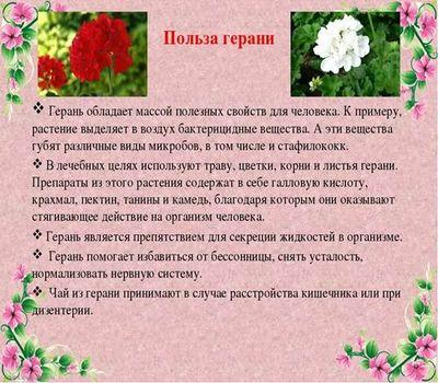 герань 6