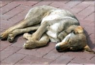 Собачка спит на улице