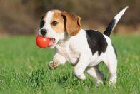 воспитание собак