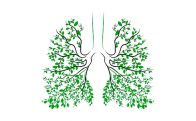 human-lungs-respiratory-system-healthy-lungs-light-form-tree-line-art-drawing-hand-medicine-96509970.jpg