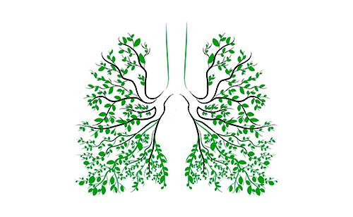 Растения дышат