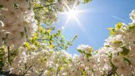 весна в поэзии