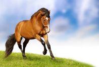 образ лошади в литературе