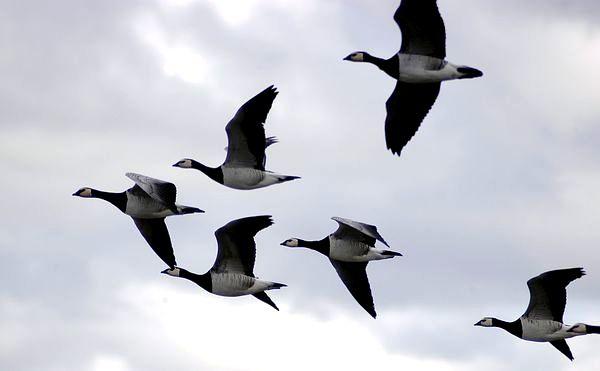 Перелётные птицы вблизи
