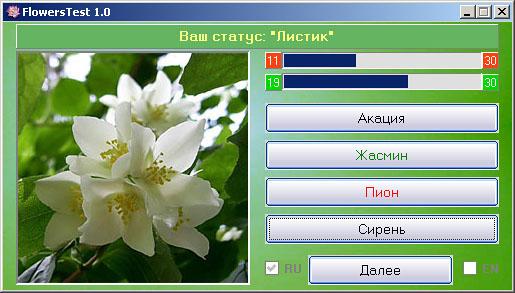 Цветок Жасмин фото