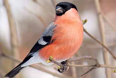 Зимующие птицы