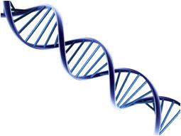 Информация, закодированная на молекулярном уровне в ДНК