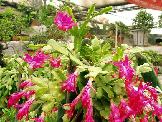 кактусы на клумбе