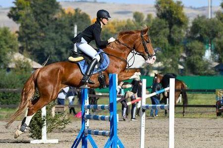 кони 1