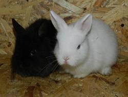 наблюдение за кроликом