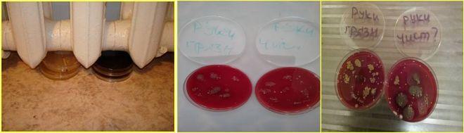 бактерии на руках на чашке Петри