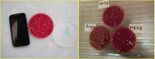 микробы на смартфонах