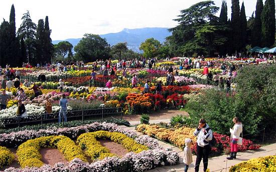 Парад хризантем в Никитском ботаническом саду