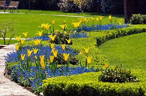 Аллеи цветов