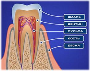 Биохимический состав тканей зуба