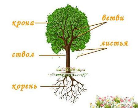 польза дерева 1