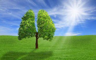 польза дерева 10