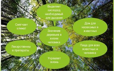 польза дерева 11