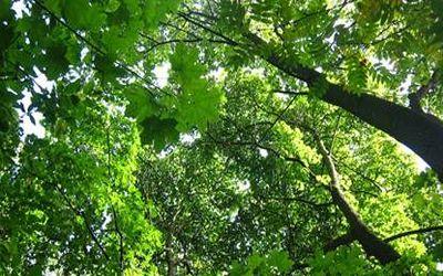 польза дерева 3