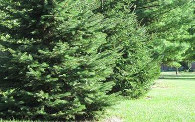 польза дерева 4