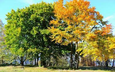 польза дерева 5